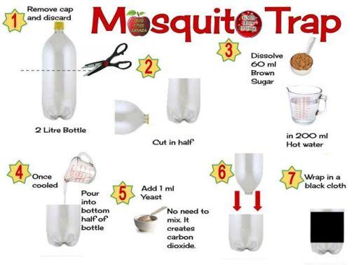 mosquito-trap1